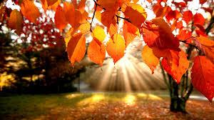 Jesienny widok.