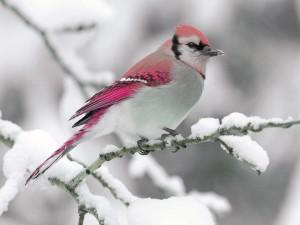 ptak w zimie