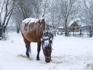 koń w zimie