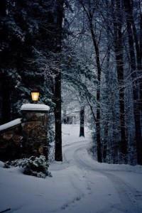 Zima w lesie.