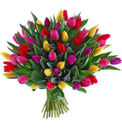 bukiet z tulipanów