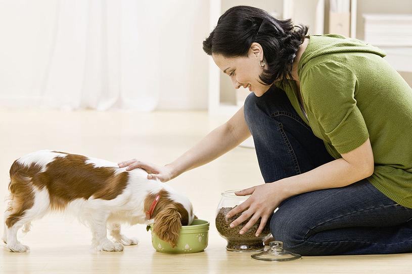 zalecenia żywieniowe dla psa