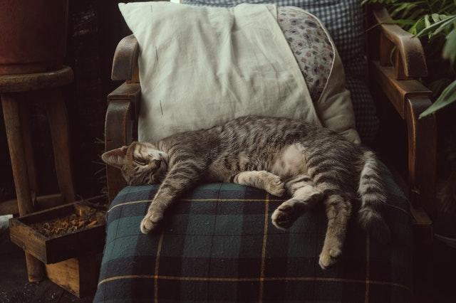 Higiena snu - rób to jak kot! Śpij tyle, ile potrzebujesz