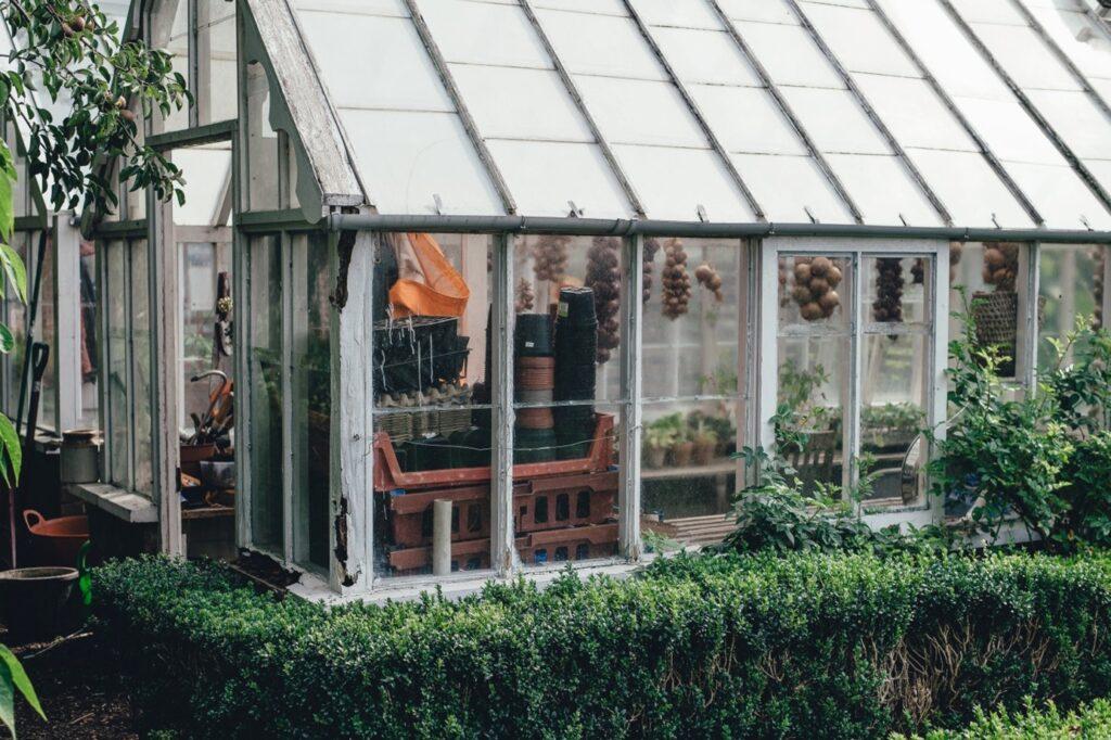 szklarnia wykonana z drewnianych okien